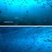 Surin underwater - s