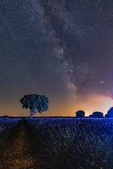 One Night in Brihuega ......., Una Noche en Brihuega....... (Joerg Kaftan) Tags: lavanda abejas vialactea campo noche estrellas paisaje nocturna brihuega castillalamancha canon eos7 markii árbol iluminación lavender bees milkyway field night stars landscape tree lighting