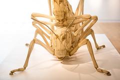 Lovers (Thomas Hawk) Tags: california sculpture usa museum america insect unitedstates unitedstatesofamerica lovers grasshopper sacramento crockerartmuseum cyrustilton fav10