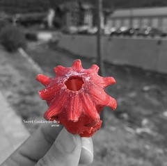 Flor hibisco deshidratada (SweetCookiesbyBea) Tags: hibiscus hibisco