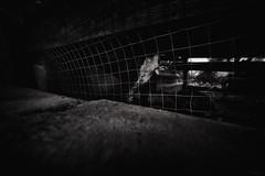 (a└3 X) Tags: street alexfenzl black withe blackwithe streetphoto blackandwithe monochrome streetphotography bw 3x city citylife urban buildings a└3x availablelight wow mono schwarzweis