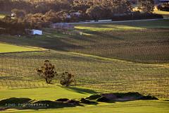 IMG_3488 copy (PONG Photography P.P) Tags: landscape nature australia southaustralia valley sunset magichour dawn