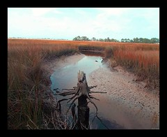 2019-08-03_08-31-28 (kennethbaker177) Tags: stump marsh landing creek river water summer hot reeds green red yellow jacksonville florida fl kenneth baker kennethbaker177 photoshop