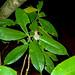 Frog. Seen at Bako National Park, Sarawak, Borneo