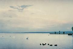 (Moesko Photography) Tags: analogue olympusom2 balaton keszthely lake summer water reflection evening clouds sky hungary duck swan animal sunset dusk