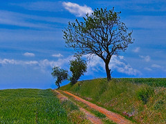 Un chemin, trois arbres et derrière... (doumé piazzolli) Tags: nature landscape paysage france hérault tree arbre chemin espondeilhan puissalicon occitanie cielbleu languedocroussillon nuage lumix fz200 balade mididelafrance