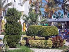 Изыски ландшафтного дизайна (galina_kayumova) Tags: африка тунис сусс портэлькантауи ландшафтныйдизайн