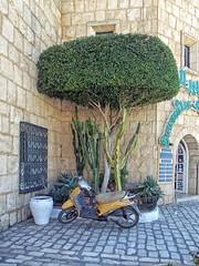 Припарковался (galina_kayumova) Tags: африка тунис сусс портэлькантауи ландшафтныйдизайн транспорт мотоцикл