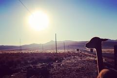 Le matin (arialex94) Tags: perú views visit vicuña viaje trip ayacucho travel work pampas galeras photo photography photographer landscape photoshoot sunlight sunrise