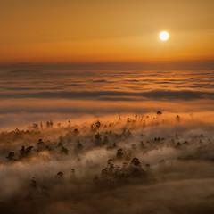 Loureiro (Noel F.) Tags: loureiro teo lampai galiza galicia sony a7riii iii a7r voigtlander 110 apo neboa fog mist mencer sunrise