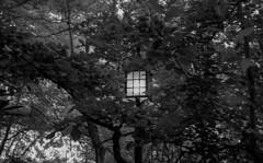 Lamp (bingley0522) Tags: leicaiiic zeissjenasonnar50mmf15ltm trix hc110h epsonv500scanner ashlandoregon lithiapark lamp ordinarythings commonplacethings oregon autaut