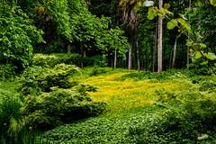 Meadows and Fields - Flora (Jose Rahona) Tags: smileonsaturday meadowsandfields meadows flora grass green yellowwildflowers trees nature