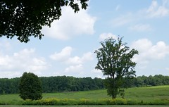 Meadow at Longwood Gardens (Dolores.G) Tags: smileonsaturday meadowsandfields