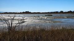 Lumpy at low tide (LeftCoastKenny) Tags: baylandsnaturepreserve shorelinepark sanfranciscobay water mudflats brush marsh grass