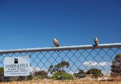 Hanson & Fitch (LeftCoastKenny) Tags: baylandsnaturepreserve shorelinepark fence birds sign text hill trees grass