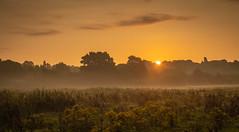 Sunrise at Reddish Vale (sean4646) Tags: red sunrise presunrise reddishvale stockport cheshire d500 nikon nature wildlife tameside
