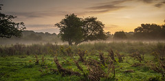 Sunrise at Reddish Vale (sean4646) Tags: sunrise presunrise reddishvale stockport cheshire d500 nikon nature wildlife tameside