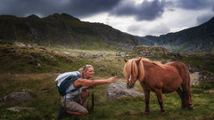 Hello you (Einir Wyn Leigh) Tags: lanscape pony rural outdoors nature valley wales mountains nikon love