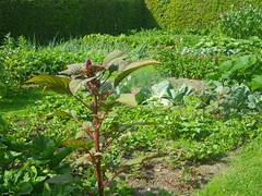 verde (abelhário) Tags: netherlands nederland niederlande holanda vegetablegarden horta gemüsegarten groentetuin verão zomer summer sommer