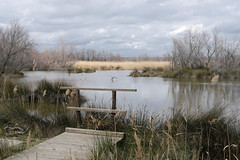 going through... (the ripped bystander) Tags: camargue landscape pontoon lake