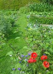vermelho e azul (abelhário) Tags: vegetablegarden horta gemüsegarten groentetuin nederland netherlands niederlande holanda zomer summer sommer verão buzzing zumbindo zoemend summend