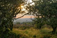 Sundown (Tony Tooth) Tags: nikon d600 nikkor 50mm f18g evening sunlight sundown goldenhour moors moorland staffordshiremoorlands gunhill staffs staffordshire countryside trees hdr