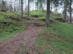 Langnes (mtbboy1993) Tags: langnes askim indreøstfold østfold norge norway singletrack roots skog røtter forest sti trail opencamera rawtherapee