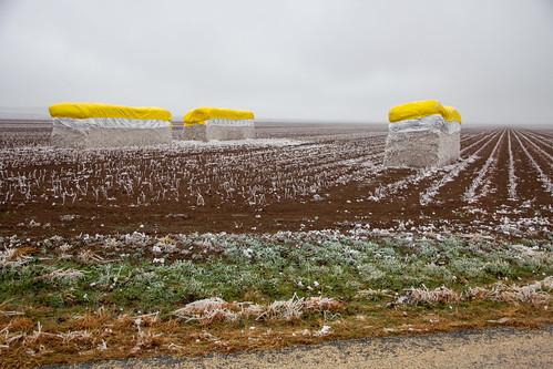 Frozen Cotton Bales