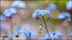 Hang On!   SS (Note-ables by Lynn) Tags: ss slidersunday photoartistry fantasy forgetmenots flowers blooms bokeh elf
