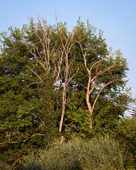 half-naked trees (cwreace) Tags: trees fujixt20 58mm goldenhour helios44m lyndhurstnj