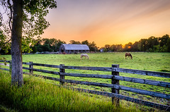 Grazing at Sunrise (Neil Cornwall) Tags: 2019 canada july ontario windsor horsefarm horses morning sunrise