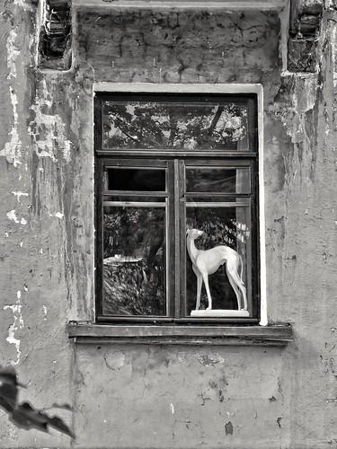 in a window ©  Sergei F