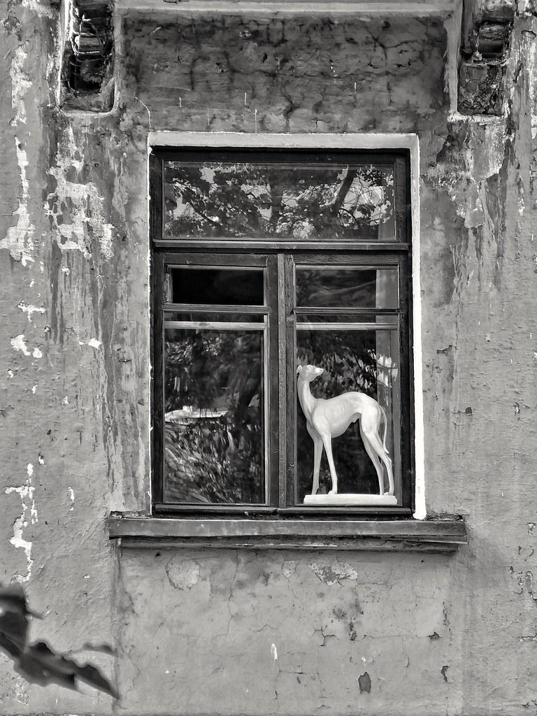 фото: in a window