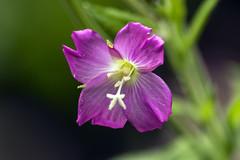 Flower (lightersideofdark) Tags: