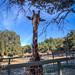 Stanley the Giraffe - Saddle Rock Ranch & Malibu Wine Safari - Malibu, California