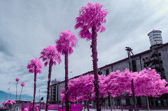 A Spectacular Welcome (rikioscamera) Tags: 590nm ir losangelesharbor sanpedro clouds d7000 harbor infrared lifepixel lightroom nikon palmtree sky trees warehouse water warehouseone