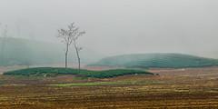 -Y2U0404-18.1.0217.Nậm Tôm.Tân Lập.Mộc Châu.Sơn La (hoanglongphoto) Tags: asia asian vietnam northvietnam northwestvietnam landscape scenery vietnamlandscape vietnamscenery morning mist tree trees hill teatreehill canon canoneos1dx canonef200mmf28liiusmlens tâybắc sơnla mộcchâu tânlập bảnhoa phongcảnh buổisáng sươngmù đồi đồichè cây hdr northernvietnam phongcảnhmộcchâu 1x2 imagesize1x2