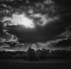 Looking for aliens (Zeb Andrews) Tags: sauvieisland oregon pacificnorthwest hasselblad blackwhite landscape film 6x6 mediumformat zaahphoto cloudy withachanceofsunbursts