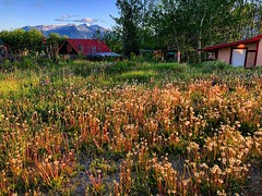Growth (Pennan_Brae) Tags: sunshine beautiful britishcolumbia nature peaceful countryside meadow springtime spring grow growth weeds mountains grass