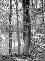 4Rcan_20190727_0023 R (4Rider) Tags: północ north landscape pejzaż poems poetry drzewo drzewa tree trees las forest
