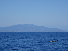 Boat trip - dolphin and whale watching
