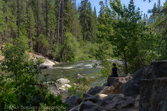 Kelly relaxing at North Fork Stanislaus River (borders92109) Tags: calaveras big trees state park california sequoia tree forest river north fork stanislaus sierras sony tamron