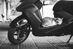 瞌睡蟲 (ciel*paradis) Tags: fujifilm xt10 xf35mmf14r taiwan taichung cat ねこ bw blackandwhite