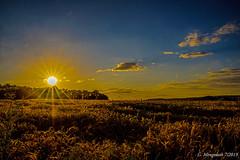 Sommer /4 (günter mengedoth) Tags: pentax hd dfa 2470mm f28 ed sdm wr sonnenuntergang sonne himmel wolken feld wald korn gerste getreide pentaxk1 pk landschaft lippe