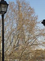 Hide & Seek (m_artijn) Tags: tour tower eiffel paris fr tree hide seek street light
