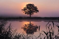 IMG_5888 (geraldtourniaire) Tags: baum natur nature eos6d ef 70200l 70200mm landschaft licht l sonnenaufgang franken mittelfranken nebel