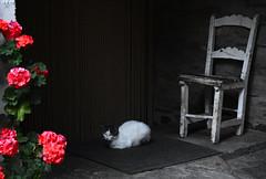 Keeper cat (diegocarreraperez) Tags: cat kitten gato gatete byn bw black white blackandwhite guardián keeper guardian silla chair puerta door casa house home pueblo holidays vacaciones lacabrera león castillayleón trabazos tranquilidad siesta nap