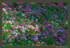 A flowering meadow (cienne45) Tags: carlonatale cienne45 natale fior flowers astratto abstract painterly colours flowering meadow floweringmeadow impressionism impressionismo
