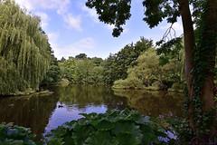 Waterlow Park / Middle Pond (Images George Rex) Tags: london camden uk middlepond waterlowpark londonpark gradeiilisted pond highgate c2b1ba66b69b11e9badce221aec796a8 afsnikkor1635mmf4gedvr england unitedkingdom britain imagesgeorgerex photobygeorgerex igr