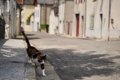 Minou en balade (Camusi) Tags: france summerinfrance summer southwest cat chat 64 été wandering pyrénées sabbatical sudouest oloronsaintemarie oloron yearoff sabbatique